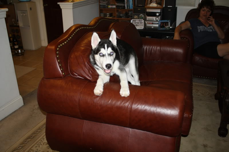 Tiko growing up! Tikocouch2