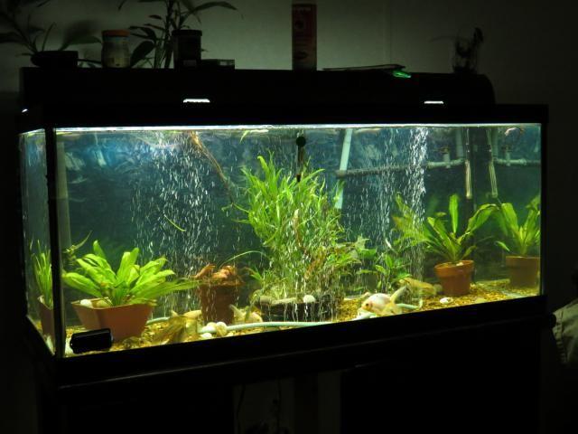 Goldfish tank Tanks084_zpsd2ab2032