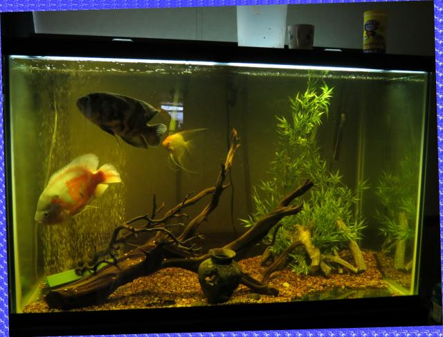 My 150 gallon Oscar tank. Tanks128_zps3fad3698