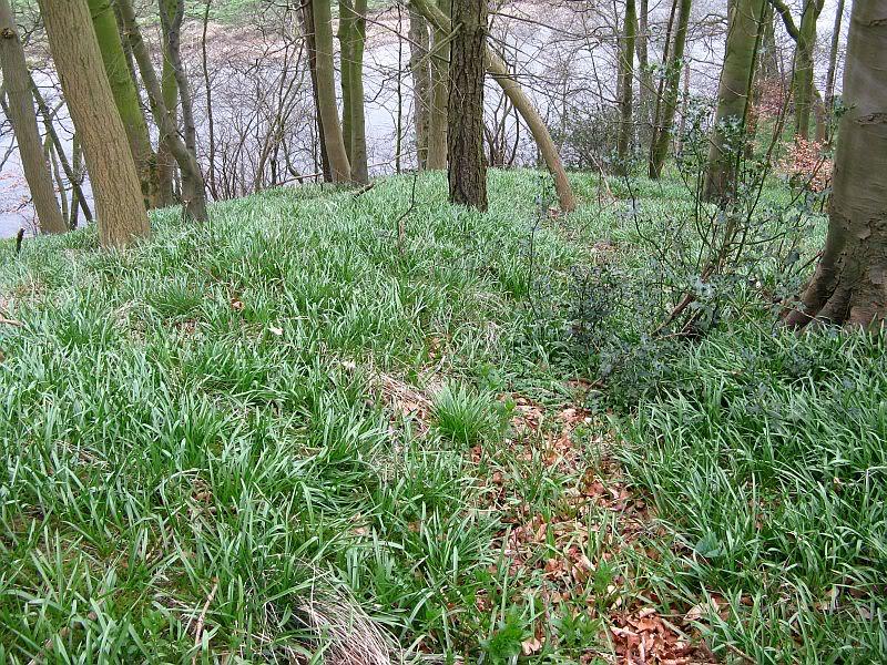 Possible Roman Site in Horton Lancashire 12