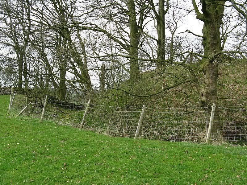 Possible Roman Site in Horton Lancashire 17