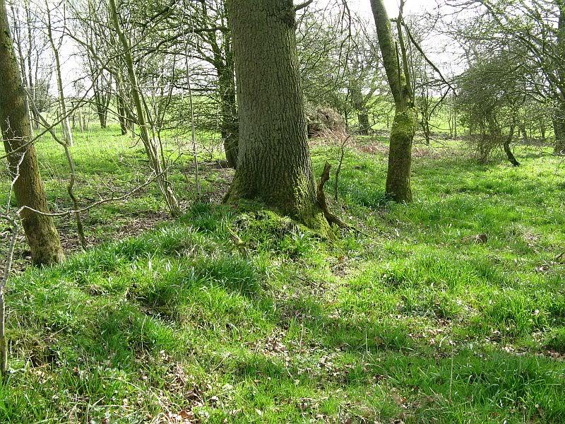 Possible Roman Site in Horton Lancashire 23