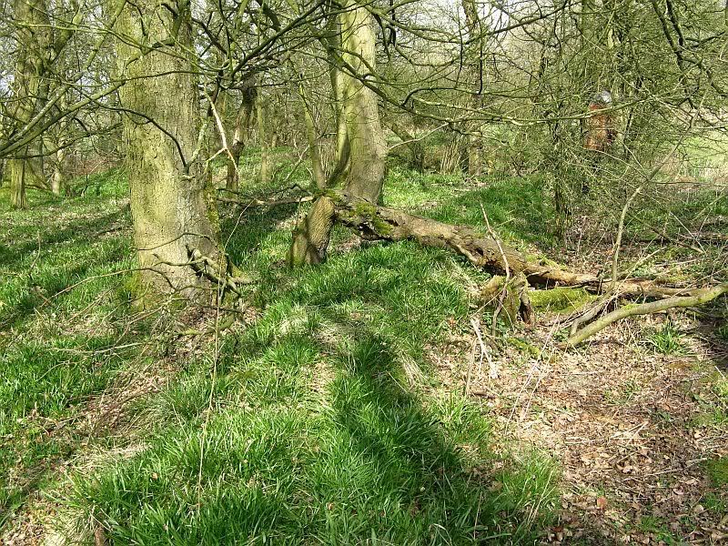 Possible Roman Site in Horton Lancashire 24