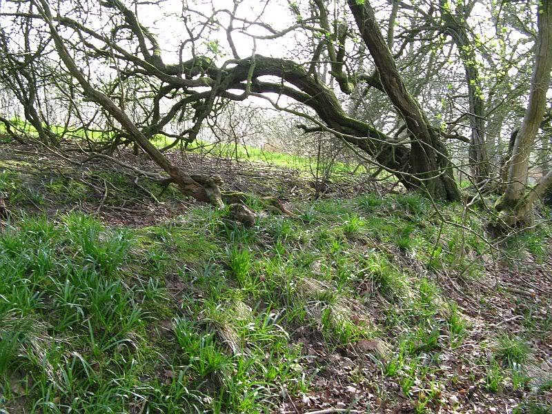 Possible Roman Site in Horton Lancashire 29