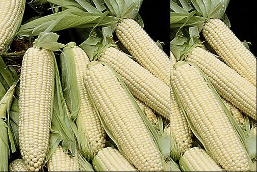 خضر غير تقليدية Sweet-corn-zea-veg-vegetable-irelan
