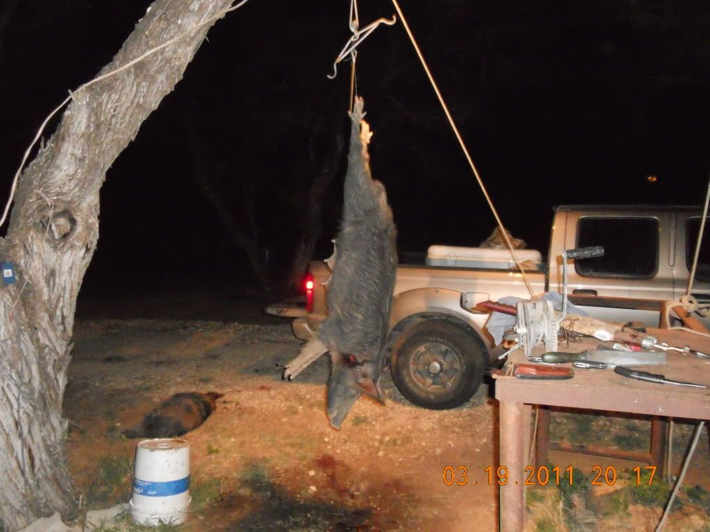 IT WAS A FIVE HOG DOWN AFTERNOON 004-10