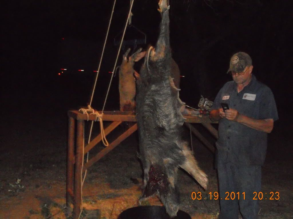 IT WAS A FIVE HOG DOWN AFTERNOON 010-4
