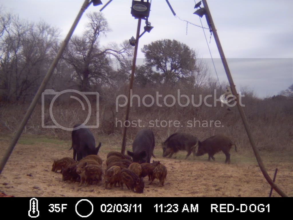 FIRST HOG HUNT OF THE YEAR 030