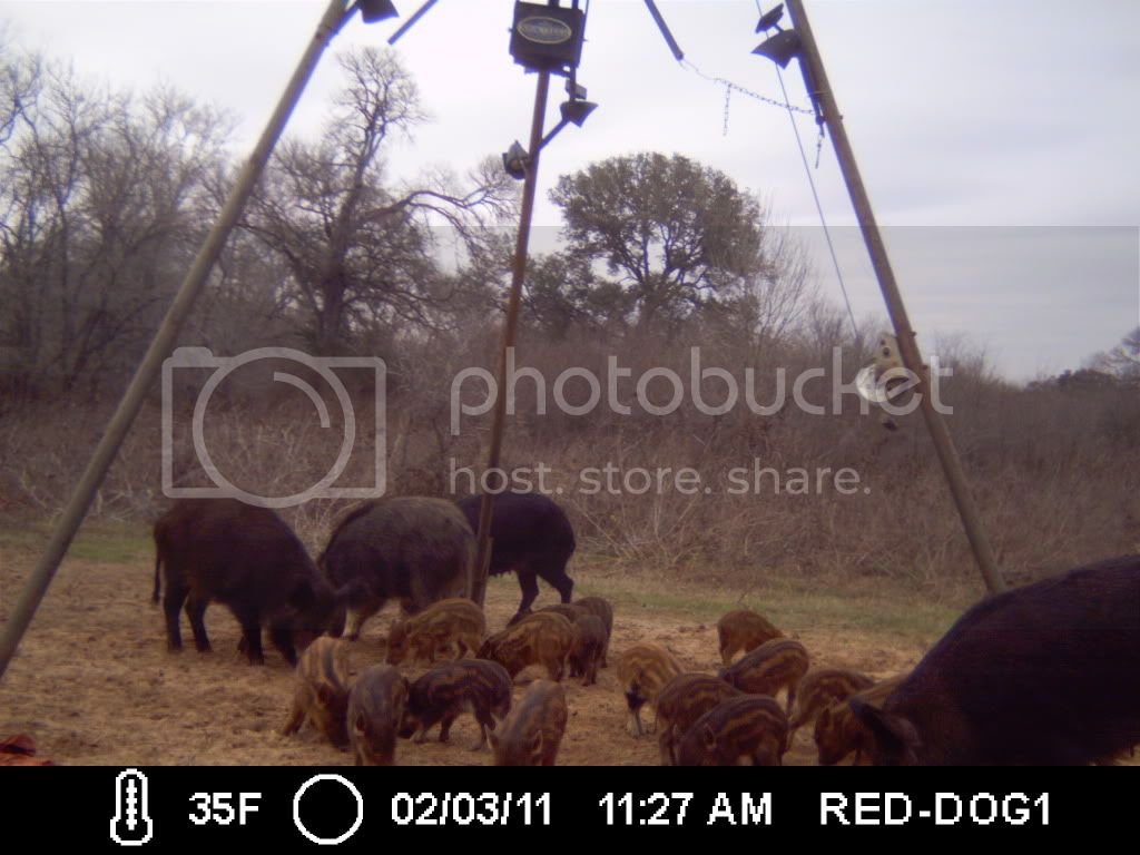 FIRST HOG HUNT OF THE YEAR 031-1