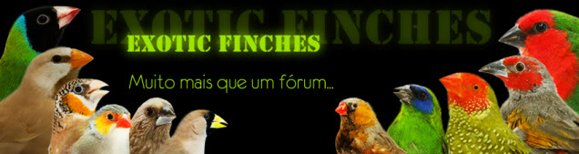 Exotic Finches Cabealho-forum2