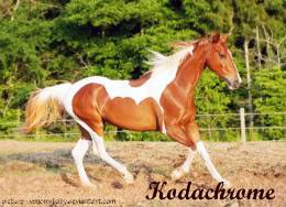 who could ask for more? Chestnut_saddlebred_7_by_venomxbabycopy-1