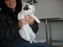 Gata branca em gatil de ABATE - Margem Sul Brancas
