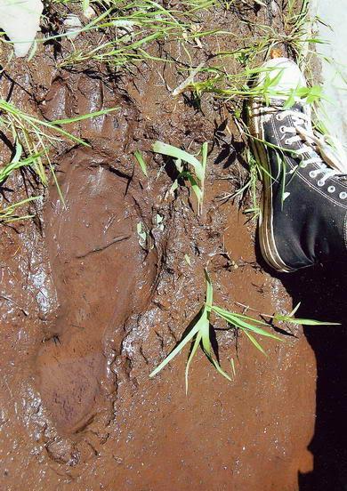 Objavljene sjajne fotografije otisaka Bigfoota 054900742