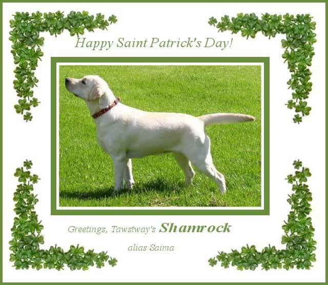 Happy Saint Patricks day! SAIMAshamrock