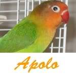 Listado de nombres Apolo