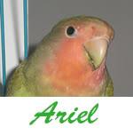 Listado de nombres Ariel