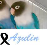 Listado de nombres Azulin