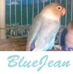 Listado de nombres Bluejean