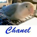 Listado de nombres Chanel