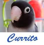 Listado de nombres Currito