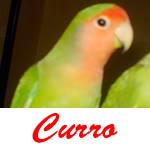 Listado de nombres Curro