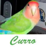 Listado de nombres Curro2