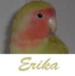 Listado de nombres Erika