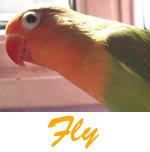 Listado de nombres Fly