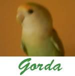 Listado de nombres Gorda