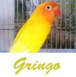 Listado de nombres Gringo