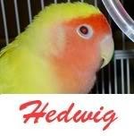 Listado de nombres Hedwig