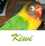 Listado de nombres Kiwi2