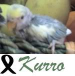 Listado de nombres Kurro2