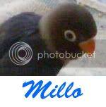 Listado de nombres Millo