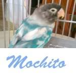 Listado de nombres Mochito