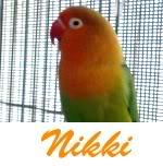 Listado de nombres Nikki