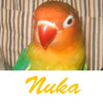 Listado de nombres Nuka