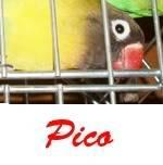 Listado de nombres Pico2