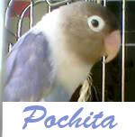 Listado de nombres Pochita