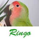 Listado de nombres Ringo