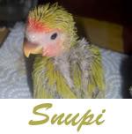Listado de nombres Snupi