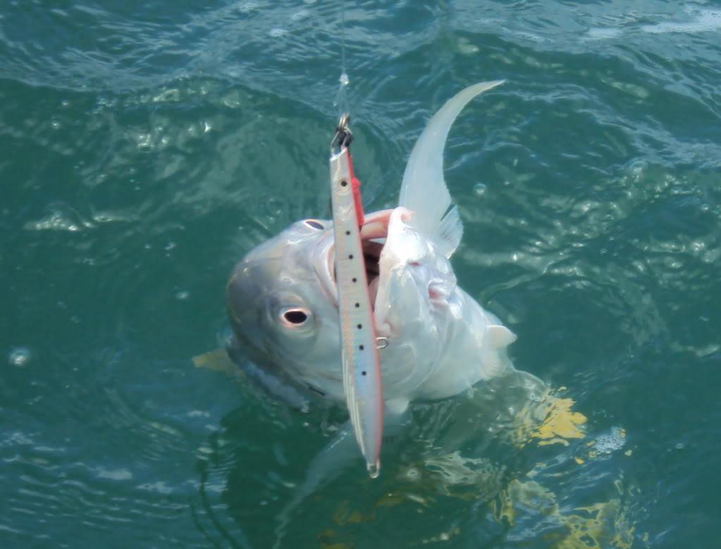 Mis Primeras Piezas en Deep Jigging / Reporte de Pesca Dave Chaves / Costa Rica Jurel3