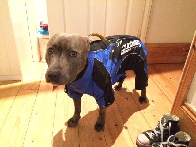 New coat Zeus24_zpsmkmmh0at