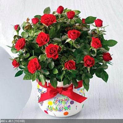 Поздравляем с Днем Рождения Юлию (Джулия 36) 4b938f7a1ee82d11d4a43e67f0f9ef0a