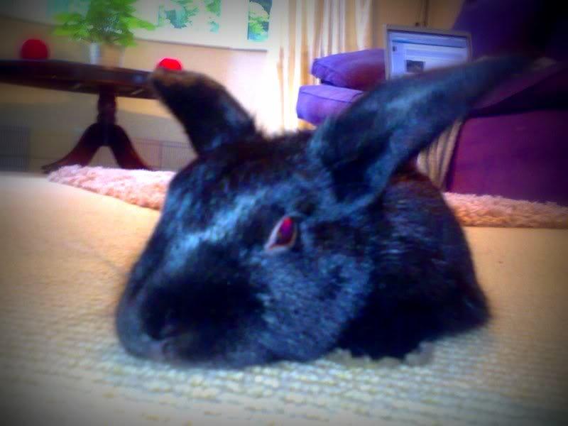 Forum Members Rabbits - Page 3 Joeychilling800x600-1