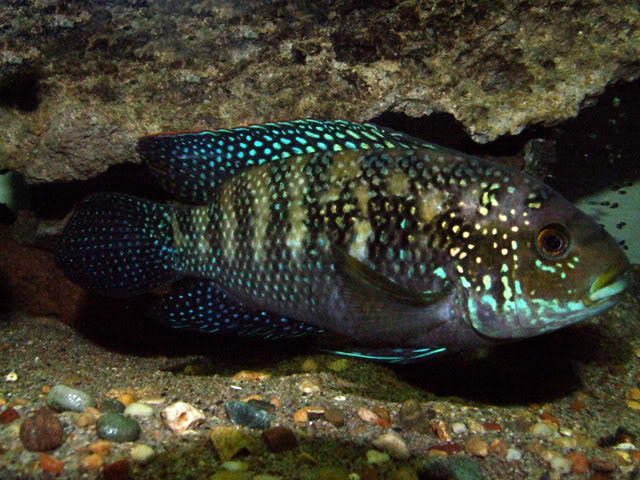 June 2010 Picture of the month, Point and Shoot Jackdempsey2