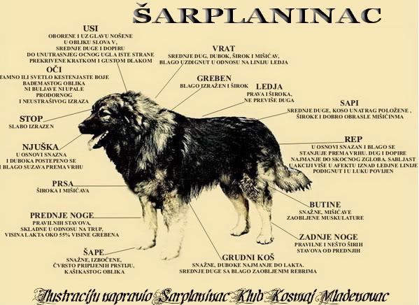 Sarplaninac 1. deo STANDARD3-1