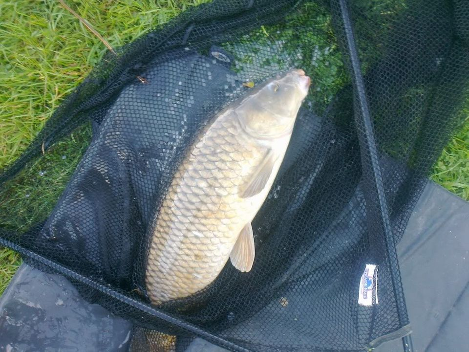 another double Common