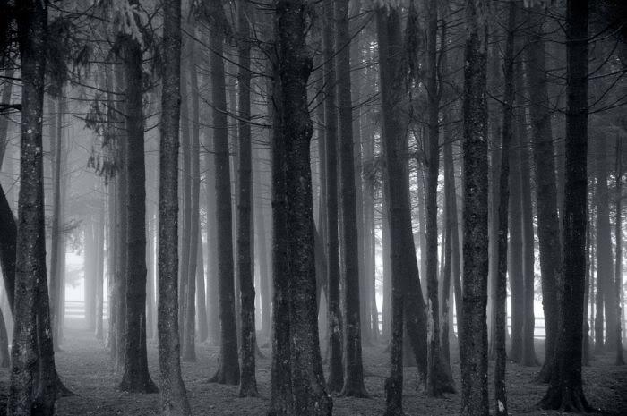Aventura: Darkness, post mortem Fog_24