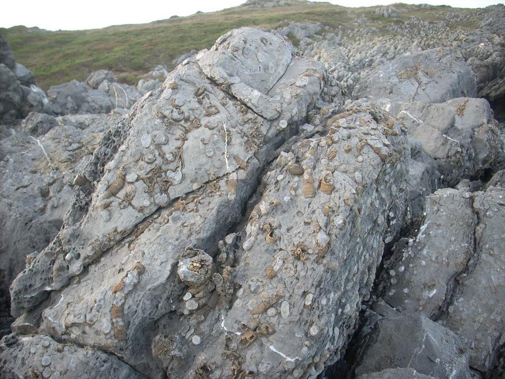 fotos de fosiles in situ DSCN7416